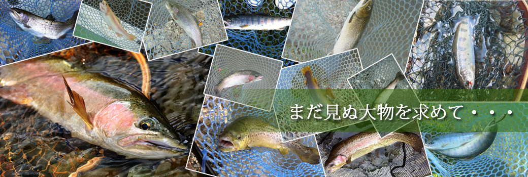 管理釣り場 魚